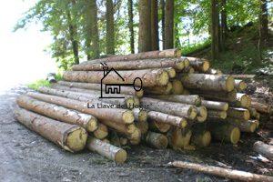 troncos apilados en el bosque